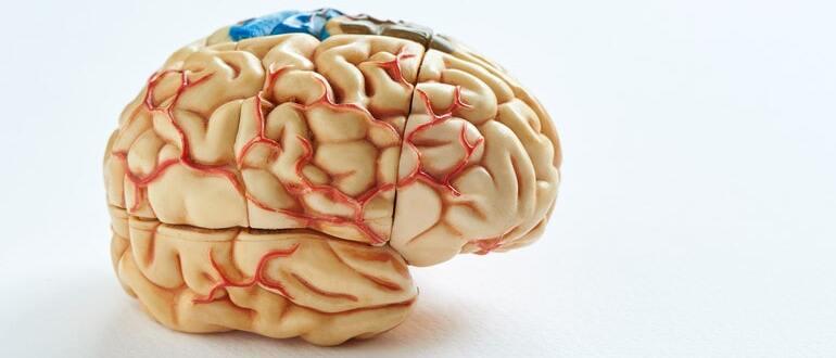 Классификация опухолей мозга